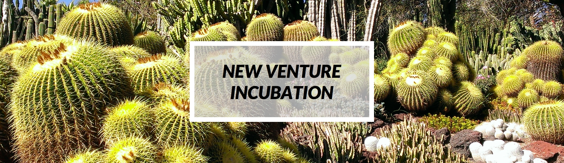 formatted_newventure